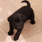 Blackie: cel mai nou membru al familiei