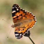 Fluturele – sau de ce mai e bun Canon EOS 50D