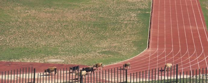 concurs de vaci
