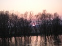 Apus in Delta Dunarii 3