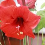 Flori din casa