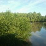 Buna dimineata Delta Dunarii!
