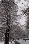 iarna pe aleea parcului