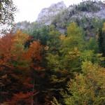 Culorile toamnei pe Jepii Mici