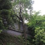 Copac in zid