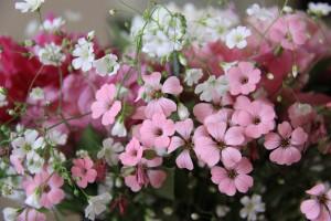 Flori de camp de mai