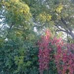 Culori de toamna in gradina
